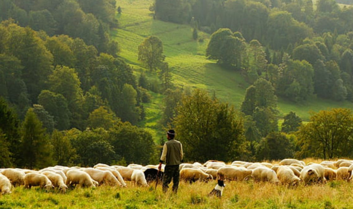 sheep-farmer-rural-herd-preview